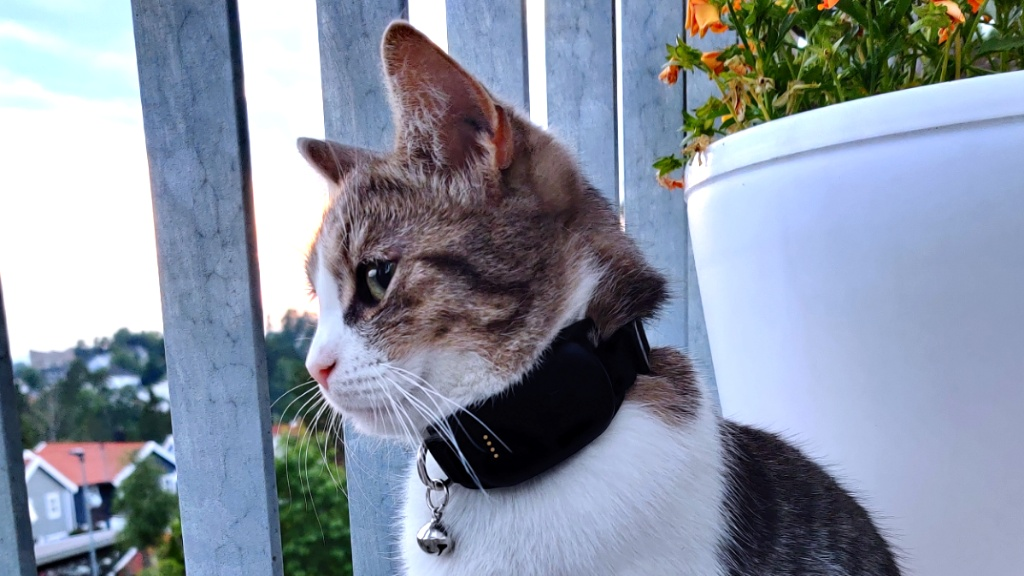 Katten Bella med MiniFinder Atto Pro